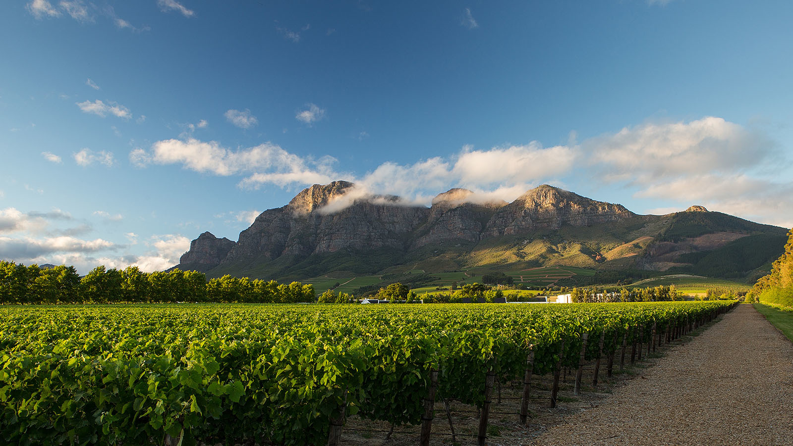 Bilde fra vingården Rupert & Rothschild