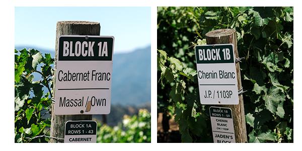 Vinmarkene hvor Cabernet Franc og Chenin Blanc dyrkes.